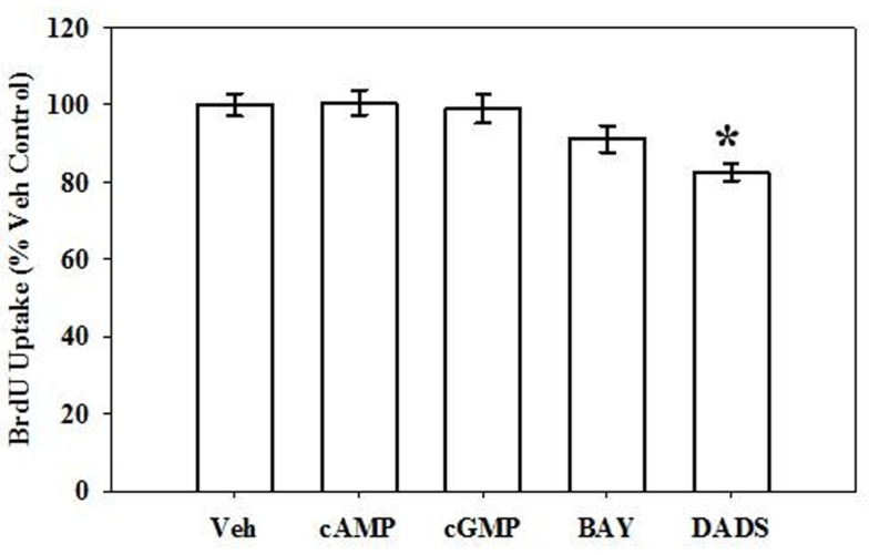 Effects of cyclic nucleotide or Cx43 stimulation on VSMC DNA synthesis . In rat primary VSMCs in the presence of 10% serum for 6 h, DADS (50 μM) significantly reduced the rate of DNA synthesis by 20% compared with vehicle controls estimated by BrdU incorporation. Data are mean ± SE from three independent experiments each with an n = 6. Student–Newman–Keuls method for multiple comparisons following one-way ANOVA was used. * p