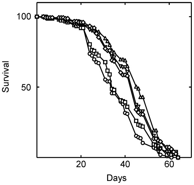 Simvastatin extends the lifespan of Drosophila . Simvastatin was fed to the flies in their food beginning on the first day of eclosure. Shown is survival at zero (○), 0.024 (□), 0.24 (▵), 2.4 (▿), and 12 (⋄) mM simvastatin. As judged by the log rank test, the lifespan of the flies was significantly changed when they were treated with 24 µM (P = 0.047), 240 µM (P