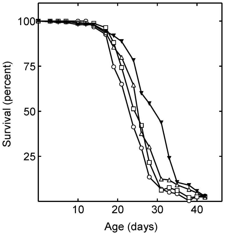 Juvenile hormone signaling and simvastatin treatment stimulate lifespan synergistically. Shown are the lifespans of Drosophila in the absence of drugs [control (○)]; and in the presence of 240 µM simvastatin (□); 320 µM methoprene (▵); and 320 µM methoprene and 240 µM simvastatin together (▾). The mean lifespan of the simvastatin, methoprene, and simvastatin with methoprene treated flies was significantly increased (P = 0.02, P = 0.0034, and P