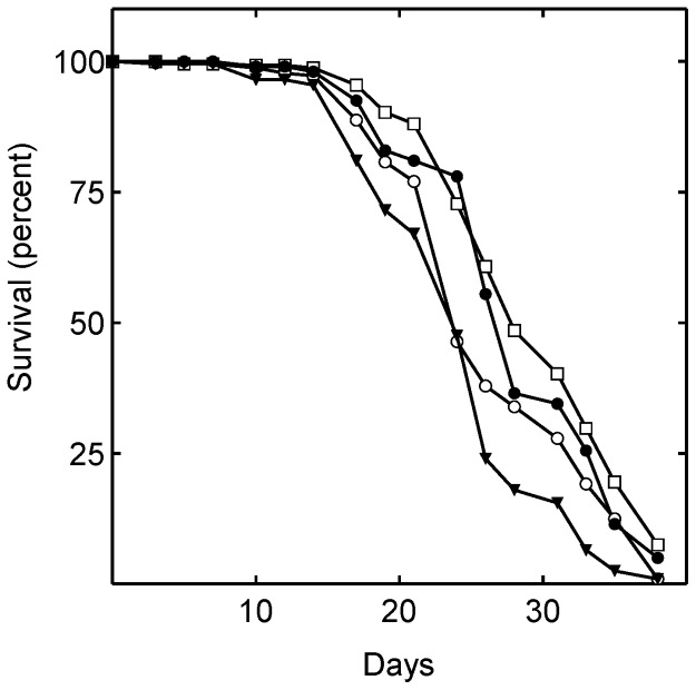 Ubiquinone administration slightly reduces lifespan. Shown are the lifespan of flies consuming food containing no drugs [control (○)]; 240 µM simvastatin (□); 5 mM CoQ10 (▾); 5 mM CoQ10 and 240 µM simvastatin (•). The mean lifespans of the flies treated with simvastatin alone (P