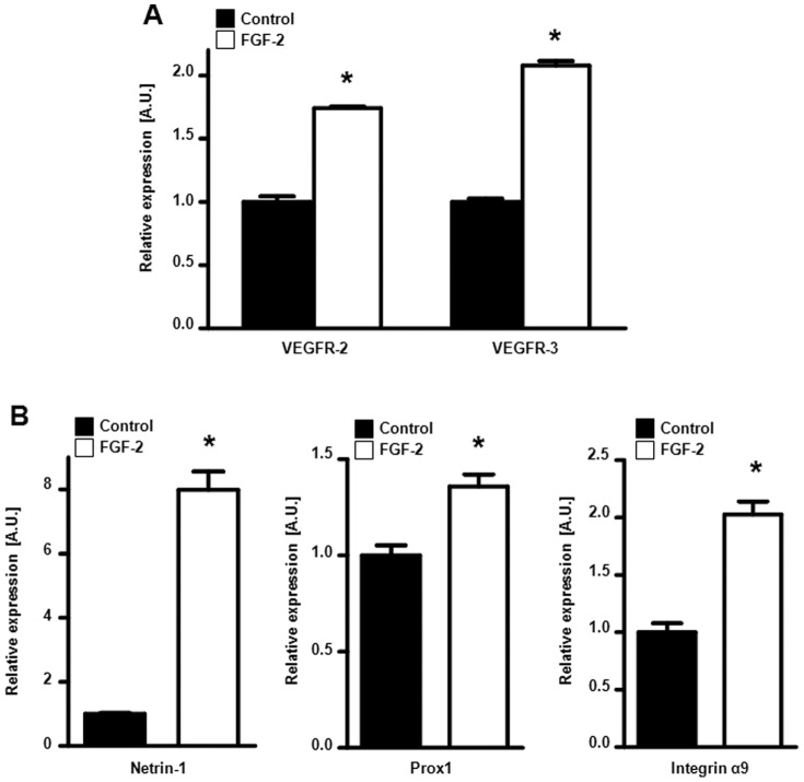 FGFR signaling stimulates expression of lymphangiogenic genes in lymphatic endothelial cells. (A) VEGFR-2 and VEGFR-3 mRNA expression is increased in FGF-2-treated (white) human dermal microvascular lymphatic endothelial cells (HMVEC-dLys) as compared to control (untreated cells, black). (B) Netrin-1 (left panel), Prox1 (middle panel) and integrin α9 (right panel) mRNA expression is stimulated by FGF-2 (white) in HMVEC-dLys as compared to control (untreated cells, black). (*p