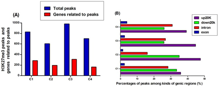 Distribution of bovine H3K27me3 peaks. (A) H3K27me3 peaks and genes related to peaks. (B) Percentages of genes related to H3K27me3 peaks. The bovine genic region was divided into four kinds of regions: 20 kb upstream of TSS, exon, intron, and 20 kb downstream of TES. The bar chart described the percentage of genes associated with H3K27me3 peaks among kinds of genic regions.