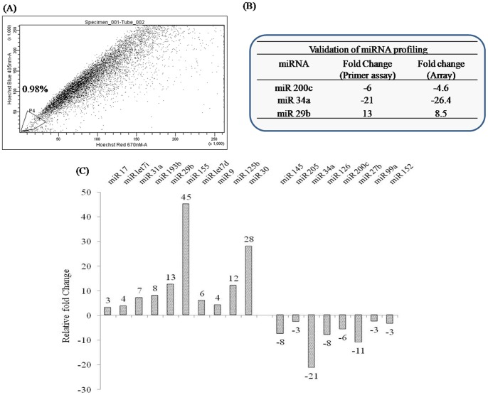 SP fraction analysis and miRNA profiling of clinical prostate tissues. (A) Human prostate cancer tissue was converted to single cell suspensions as described in ' Methods '. Cells were stained with Hoechst dye and analyzed as described previously. Nearly 1% of total viable cell population was gated as the SP fraction. (B) Total RNA was isolated from another set of human prostate tissues (cancer and benign) using miRNEasy RNA isolation kit. SYBR Green based pathway-focused miScript miRNA PCR Array (Qiagen, MD) was used for miRNA profiling studies. The plates were run on a Roche Light Cycler 480® instrument and the expression of individual miRNAs was analyzed using the obtained C t values and the ΔΔCt method. The fold changes in the tumor tissues were normalized with respect to the benign prostate tissue. (C) Table in the insert confirms validation of miRNA profiling data by miScript primer assay. Validation of miRNA profiling data was done by RT-PCR estimation of selected miRNAs200c, 34a and 29b. SNORD6 was used as a housekeeping miRNA for data normalization.