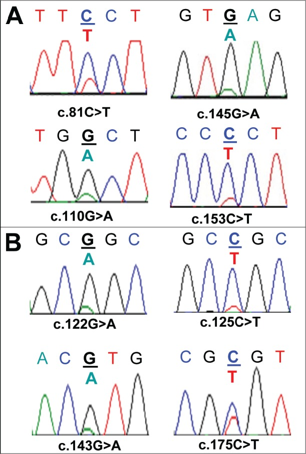 Sequence artefacts detected in FFPE DNA by Sanger sequencing Multiple non-reproducible sequence artefacts detected in the AKT1 sequence from FFPE DNA are shown. Panel A: Four sequence artefacts detected in the SCC8 sample without UDG treatment. Three of the sequence artefacts (c.81C > T, c.145G > A and c.153C > T) were found in the same amplicon from one replicate and the c.110G > A change was detected in the second replicate. Panel B: Four sequence artefacts detected in three FFPE DNA samples (SCC7, SCC11, and SCC14) after UDG treatment. c.122G > A and c.143G > A changes were detected in different replicates from the SCC7 sample. A c.125C > T (SCC11) and a c.175C > T (SCC14) change was found in a replicate of SCC11 and SCC14 respectively. All of the C:G > T:A changes that were found after UDG treatment were detected in the sequence context of CpG dinucleotides.