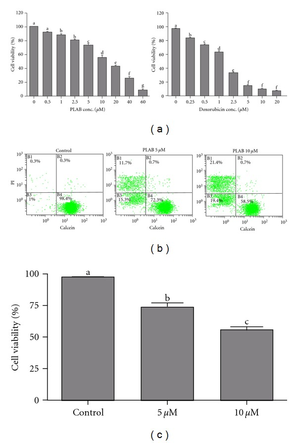 Effect of PLAB on U87 glioblastoma cell viability. (a) U87 cells were treated with indicated concentrations of PLAB and <t>doxorubicin</t> (positive control) for 24 h and cell viability was determined by <t>MTT</t> assay. Data are expressed as Mean ± SEM ( n = 3). Columns not sharing the same superscript letter differ significantly ( P