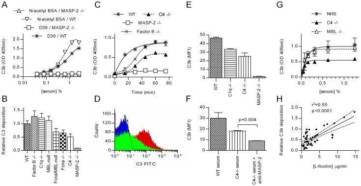 MASP-2 is essential for C3 deposition on S pneumoniae . Serial dilutions of sera were incubated in microtiter plates coated with S. pneumoniae D39 or N-acetylated <t>BSA</t> (as a control), and C3 deposition determined by ELISA. A. Shows the raw data from one experiment with WT and MASP-2 deficient murine serum (means ±SEM). In B , the experiment was extended to include murine sera deficient in other complement components. Results are duplicates (±SD) and are normalised to the C3 deposition observed in the WT control. C. Time course of C3 activation on S. pneumoniae . 1∶40 diluted murine sera were incubated in microtiter plates coated with S. pneumoniae for the times indicated then C3 deposition assayed. Results are means of duplicates and are representative of three independent experiments. D. FACS analysis of C3 deposition on S. pneumoniae opsonised with MASP-2 −/− serum (black line), WT serum (red) and C4 −/− serum (green). The blue trace shows non-opsonised bacteria. E. Results from 3 independent FACS analyses of C3 deposition (mean fluorescent intensity ±SEM). F. Inhibition of MASP-2 activity with mAb AbD04211 abolished C3b deposition on S. pneumoniae opsonised with C4 deficient serum. (means of triplicates ±SEM; p value from Student's t-test). G. In human serum, <t>MBL</t> deficiency had no effect on C3 deposition, while C4 deficiency had no significant effect on the EC 50 , but reduces absolute C3b deposition by about 50% (means ±SEM; n = 3 for NHS and MBL −/− serum, 1 for C4 deficient serum). H. Correlation between L-ficolin serum concentration and C3b deposition on S. pneumoniae immobilised on microtiter plates for 47 samples of NHS (solid line shows Fisher transformation of Pearson's correlation coefficient; dashed lines, 95% CI thereof).