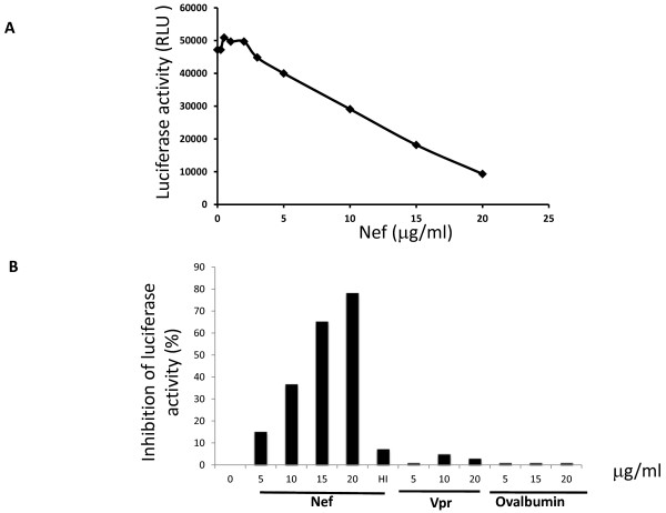 <t>HIV-1</t> Nef inhibits translation in vitro . The level of translation of the luciferase mRNA has been measured in the presence of increasing concentrations of <t>rNef,</t> rVpr or recombinant ovalbumin in RRL. Recombinant HIV-1 Vpr and ovalbumin were used to test the specificity of Nef action on translation. In addition an inactive form of Nef was obtained by heating at 100°C for 5 min (HI).