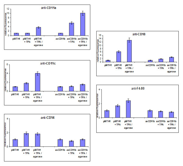 20S proteasomal proteolytic activity. The pMTH1-U937 and asCD11b-U937 cells were treated with 5nM TPA for 4 h up to 72 h. At the time points indicated the cells were harvested and nuclear extracts were measured by a fluorometric proteolytic assay to obtain the 20 S proteasomal activity. The relative proteasomal activity of pMTH1-U937 control cells in steady-state was set to 100%. Data represent the mean ± s.d. of three independent experiments.