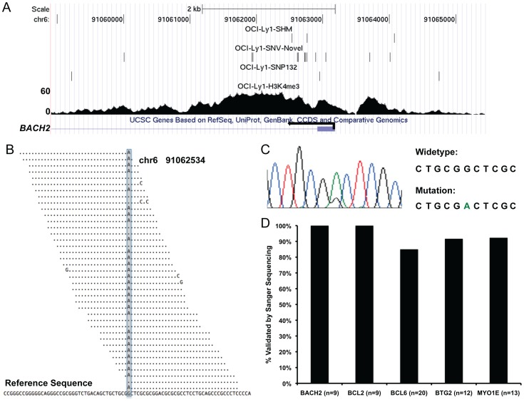 Detection of SHM. (A). A snapshot of UCSC genome browser showing H3K4me3 ChIP-seq reads density at BACH2 promoter. The top three tracks represent SHMs, novel SNVs, and known SNVs (SNP132) detected in OCI-Ly1 by applying SHMseeqer to OCI-Ly1 H3K4me3 ChIP-seq short reads. (B). OCI-Ly1 H3K4me3 ChIP-seq short reads spanning chr6 position 91062534 ( BACH2 intron 1) where a SHM was detected (shaded). (C). Sanger sequencing trace showing detection of both G (wild-type) and A (mutation) at chr6 position 91062534 in OCI-Ly1. (D). Overall validation rates of selected SNVs/SHMs within BACH2 , BCL2 , BCL6 , BTG2 , and MYO1E loci. N indicates number of SNVs/SHMs validated by Sanger sequencing in each locus.