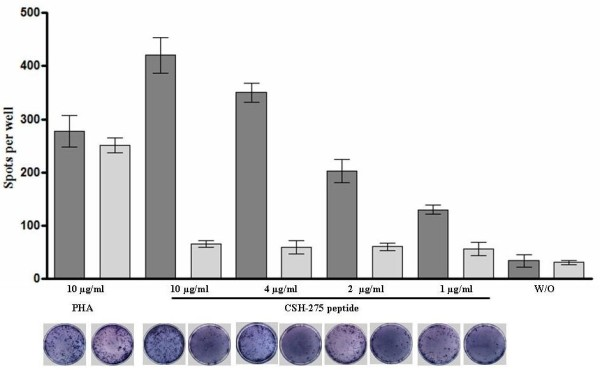 IFN-γ release . IFN-γ-ELISpot results from three different experiments, expressed as number of spots per well (mean ± SD), showed the immune-response of DHD-K12-inoculated rats (dark grey) against CSH-275 peptide. No effect was produced on PBMC from control rats (light grey). Increasing concentration of peptide yielded an increasing numbers of IFN-γ producing PBMC. Under each histogram there is the corresponding image illustrative of blue spots. As negative contros we showed the non stimulated PBMC (W/O).