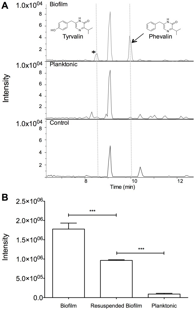 S. aureus biofilms produce more phevalin than their planktonic counterparts. (A) HPLC-MS analysis of organic extracts from S. aureus biofilm, planktonic, and growth medium control revealed that biofilms produce more phevalin (aureusimine B) than planktonic cultures (arrow). A compound that is likely tyrvalin (aureusimine A) was also present at higher levels in the biofilm (*). (B) Phevalin production was detected directly in samples without prior organic extraction. Samples were normalized to cell density (optical density, 600 nm, OD 600 ) in biofilm (OD 600 0.9), resuspended biofilm (OD 600 1.4), and planktonic cultures (OD 600 0.66). Data represent means ± SEM, n = 3, ***p