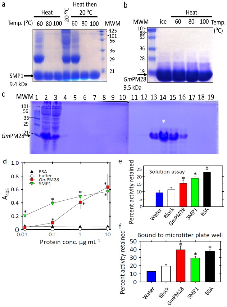 Recombinant protein expression and purification for use as biopanning bait. ( a ) Heated E. coli lysates of SMP1; ( b ) Heated fraction 15 GmPM28 recombinant protein; ( c ) Both SMP1 and Gm PM28 were recovered from lysed E. coli and the hexahistidyl tagged proteins purified on a nickel-charged column. SDS-PAGE (15%) separate the proteins in 10 μL of: (1) marker; (2) protein before filtration; (3) unbound proteins; (4) start of, and; (5) end of the column wash; (6–9) every third fraction; Lanes (10–16) fraction 11 through 17; lanes (17–19) fractions 20, 23 and 26; ( d ) ELISA assays showing the LEA proteins attach to the microtiter plate wells. Mean ± standard error at pH 7.5 depicted; ( e ) In solution G6PDH protection assays with LEA proteins, BSA, commercial blocking reagent or water; ( f ) G6PDH protection assays using various proteins or block bound to the microtiter plate well. Asterisks in d - f denotes significant differences among: ( d ) ELISA readings for SMP1 or GmPM28 and BSA/buffer; ( e , f ) percent activity retained relative to the block.