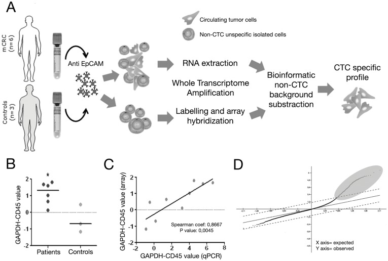<t>CTC</t> gene expression profiling methodology. ( A ) Schematic representation of the procedure used for CTC molecular characterization. CTC were isolated from 7.5 mL of peripheral blood by immunomagnetic separation using anti-EpCAM coated magnetic beads. Isolated cells were subjected to a <t>RNA</t> extraction followed by a whole transcriptome amplification process (WTA). Finally amplified cDNA was hybridized onto Agilent gene expression arrays. ( B ) GAPDH-CD45 levels in controls and mCRC patients measured by real time PCR. Horizontal bars represent the median value of each group (*p