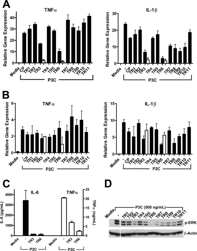Effect of TIRAP decoy peptides on TLR2 signaling. Mouse macrophages were incubated in the presence of 20 ( black bars ) or 40 ( white bars ) μ m decoy peptide for 30 min prior to stimulation with P3C (500 ng/ml; A and C ) or P2C (50 ng/ml; B ). Cytokine mRNA expression was measured 1 h after TLR2 stimulation and is normalized to expression of the hypoxanthine phosphoribosyltransferase gene. C , IL-6 and TNF-α were measured by ELISA in macrophage supernatants collected 5 h after P3C (500 ng/ml) stimulation. D , ERK phosphorylation was measured by Western analysis in primary macrophage stimulated with P3C for 30 min. CP , control peptide.