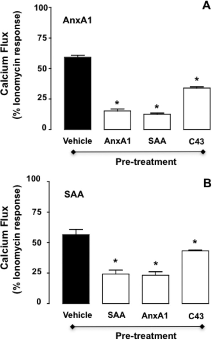 FPR2/ALX desensitization in human neutrophils upon agonist stimulations. Freshly isolated human neutrophils were treated with vehicle, AnxA1 (10 n m ), SAA (0.1 μ m ), or C43 (1 μ m ) for 5 min prior to the addition of AnxA1 (10 n m ; A ) or SAA (0.1 μ m ; B ). Data (means ± S.E. of more than three distinct experiments done in triplicate) are reported as percent ionomycin (1 μ m ) response. *, p