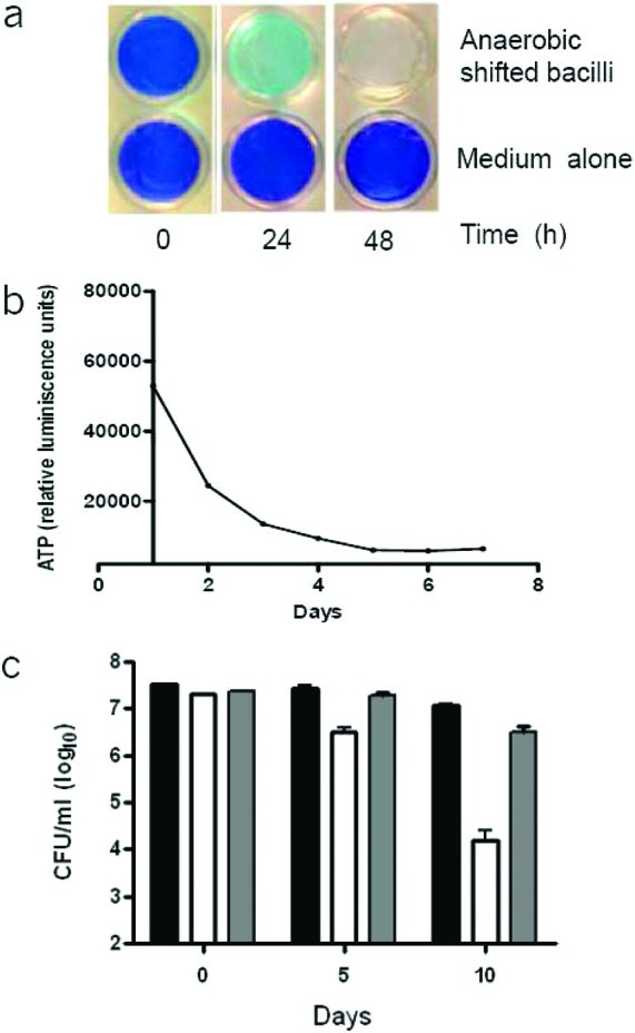 Viability and intracellular ATP levels of M. bovis BCG during the hypoxic shift down assay. (a) Upper row: A hypoxic M. bovis culture was inoculated at an OD 600 of 0.2 in a 24-well plate and shifted into a hypoxic atmosphere. The presence of oxygen left in the culture was monitored by decolorization of methylene blue. Methylene blue decolorized after 2 days. Lower row: Control wells with methylene blue, but without bacilli, in a hypoxic atmosphere. (b) ATP levels (RLU, relative luminescence units) were monitored daily for a period of 7 days. (c) Survival of M. bovis BCG and M. bovis BCG: ΔdosR in the hypoxic shift down model. Viability (CFU/mL) of M. bovis BCG parental (black bar), M. bovis BCG: ΔdosR (white bar), and complemented mutant (gray bar) was determined at each time point in the hypoxic shift down model. The experiment was carried out three times in triplicate, and results are given as means ± SD.