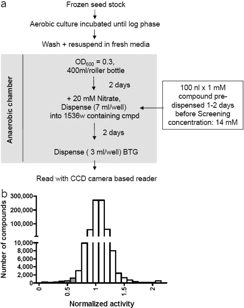 High-throughput screening of the chemical compound library on hypoxic M. <t>bovis</t> <t>BCG</t> MtbNar . (a) Schematic representation of the M. bovis BCG MtbNar hypoxic shift down HTS process. (b) Histogram showing the distribution of compounds versus activity for the HTS. Plate median activity was normalized to an arbitrary value of 1, and the putative hits were identified from those of activity