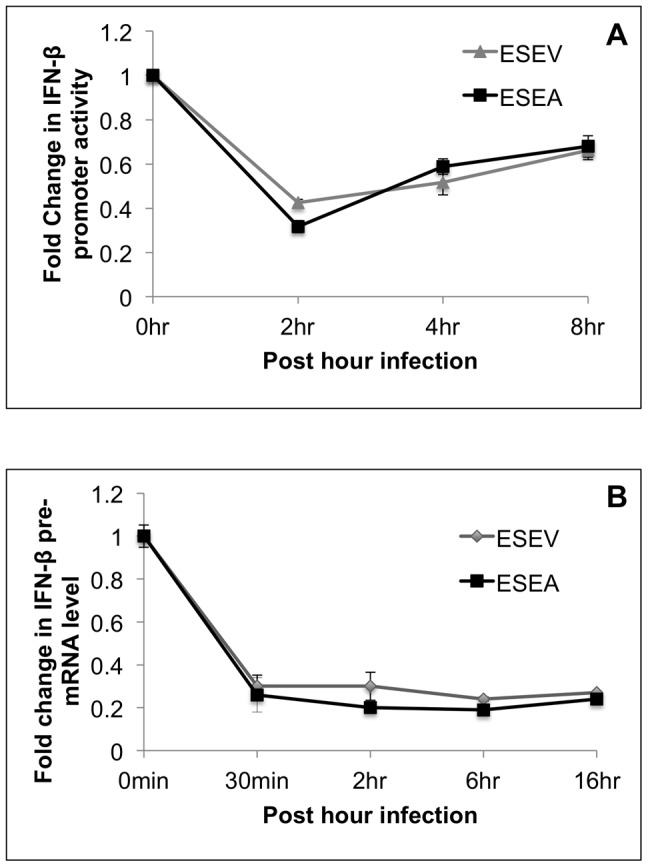 Effects of NS1 ESEA PBM on activation of IRF3 and IFN-β pre-mRNA levels during influenza A infection. A) A549 cells were transfected with IFN-β Luciferase and Renilla Luciferase plasmids. After 24 hours, cells were infected with wt or ESEA virus at an m.o.i. of 1.0. Samples were collected at the indicated times for Luciferase assays. IFN-β luciferase values were normalized to Renilla Luciferase. Error bars represent the standard error of the mean. B) A549 cells were infected with either wt or ESEA virus at an m.o.i. of 1.0. Total RNA was isolated at the indicated times post-infection and RT-PCR assays were performed for IFN-β pre-mRNA as described in Methods . IFN-β pre-mRNA levels were normalized to GAPDH mRNA levels. Error bars represent the standard error of the mean.