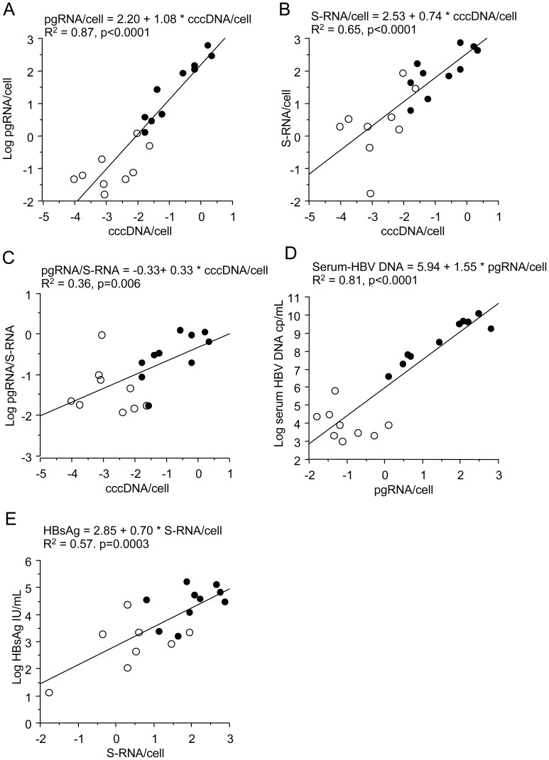 Correlations between different markers for viral productivity in liver and serum. A-C show strong correlation in 19 liver biopsies between cccDNA levels and pgRNA (A) and S-RNA (B), and significant correlation between cccDNA and pgRNA/S-RNA ratio (C). D shows strong correlation between pgRNA and serum levels of HBV DNA (but lack of correlation within the HBeAg-negative subgroup). E shows relatively strong correlation between S-RNA and HBsAg in serum. Filled dots HBeAg positive, open dots HBeAg negative.