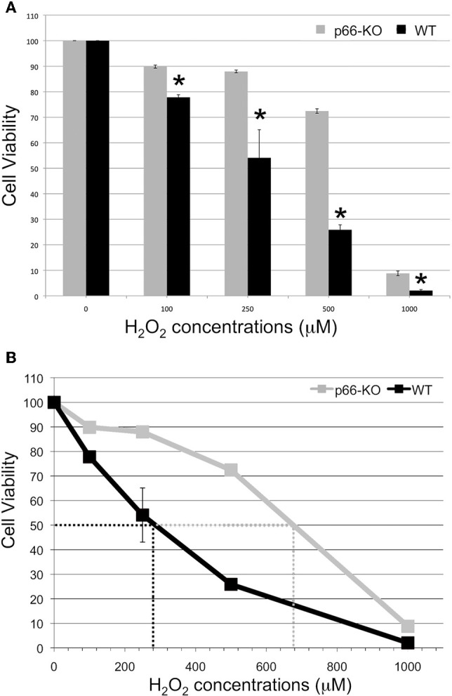 p66-KO neurons are more resistant to H 2 O 2 treatment compared to WT neurons. Week-old p66-KO and WT hippocampal neurons were treated with various concentrations of H 2 O 2 (100, 250, 500 μM, and 1 mM) for 15 min. Cell counts were obtained 24 h post-treatment using Calcein AM as a viability indicator. (A) Cell viability percentages were significantly greater for the p66-KO neurons compared to the WT neurons for the tested H 2 O 2 concentrations ( * = p