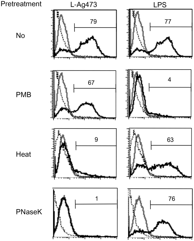 The biological activity of L-Ag473 is retained after pretreatment with PMB but abolished by heat or proteinase K treatment. BMDCs were treated with L-Ag473 (100 ng/ml) or LPS (20 ng/ml) for 6 hours and the intracellular TNF-α of CD11c + cells were determined by flow cytometry. Dotted and grey lines represent the isotype-matched control Ab and untreated cell, respectively. PNaseK, proteinase K.