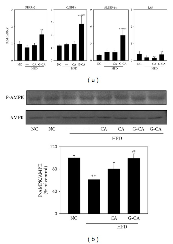 Effect of CA or G-CA extracts on adipogenic gene expression and AMPK phosphorylation. Three weeks after beginning a high-fat diet, C57BL6 mice were orally administered CA or G-CA extract (200 mg/kg body weight) or PBS daily for 8 weeks. (a) PPAR γ 2, C/EBP α , SREBP-1c, and Fas mRNA levels were measured in epididymal fat pads by quantitative real-time PCR. Values are expressed as fold change compared with the NC group. (b) Phospho (P)-AMPK and AMPK protein expression in epididymal fat pads was analyzed by western blot (upper panel) and quantified (lower panel). Values are mean ± SE. NC: untreated, normal chow diet; PBS: PBS-treated, high-fat diet (HFD); CA: CA-treated, HFD; G-CA: G-CA-treated, HFD. * P