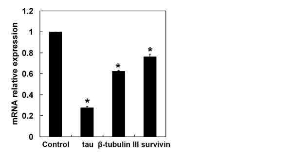 GA down-regulates the expression of genes involved in Doc sensitivity . The mRNA expression of genes involved in Doc sensitivity, including β-tubulin III, tau and survivin, in BGC-823 cells was determined by qRT-PCR after 48 h of GA (0.25 μM) treatment. The mRNA expression of target genes was normalized to a control. * P