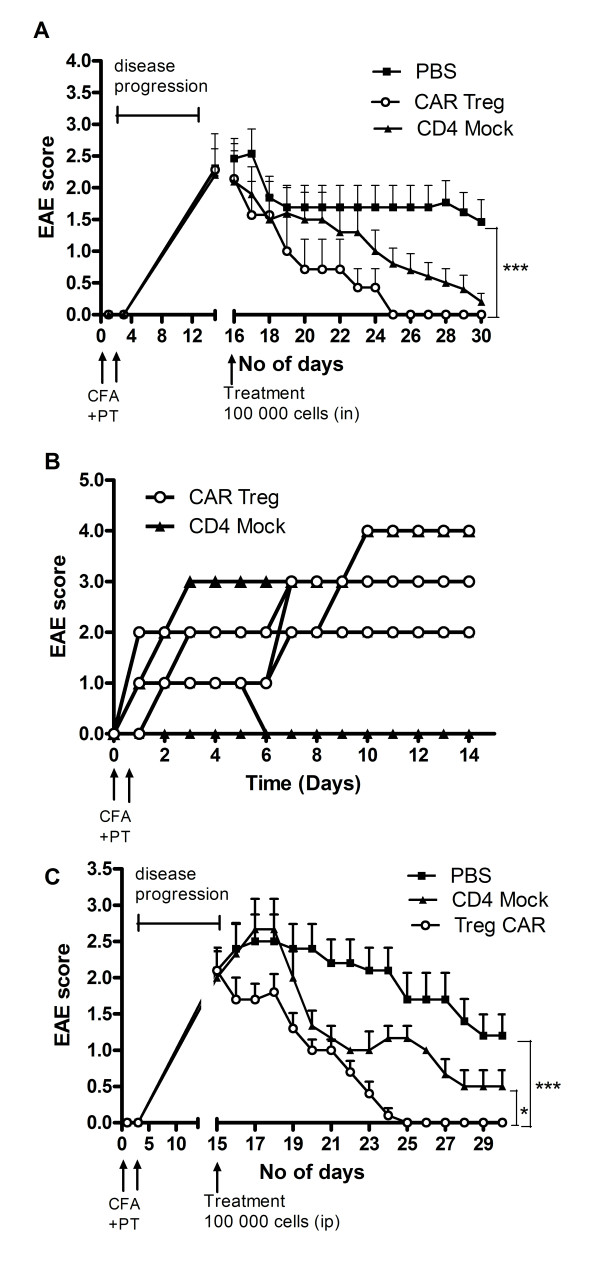 CNS-targeting Tregs can reduce EAE symptoms. ( A ) Ten mice in three groups were given 1 × 10 5 CAR Tregs, CD4 + Mock T cells or PBS alone by i.n. administration at the peak of EAE inflammation (15 days post-EAE immunization) and thereafter were monitored for EAE symptoms. Ten days post cell treatment all EAE mice in the CAR Treg group were cured ( P