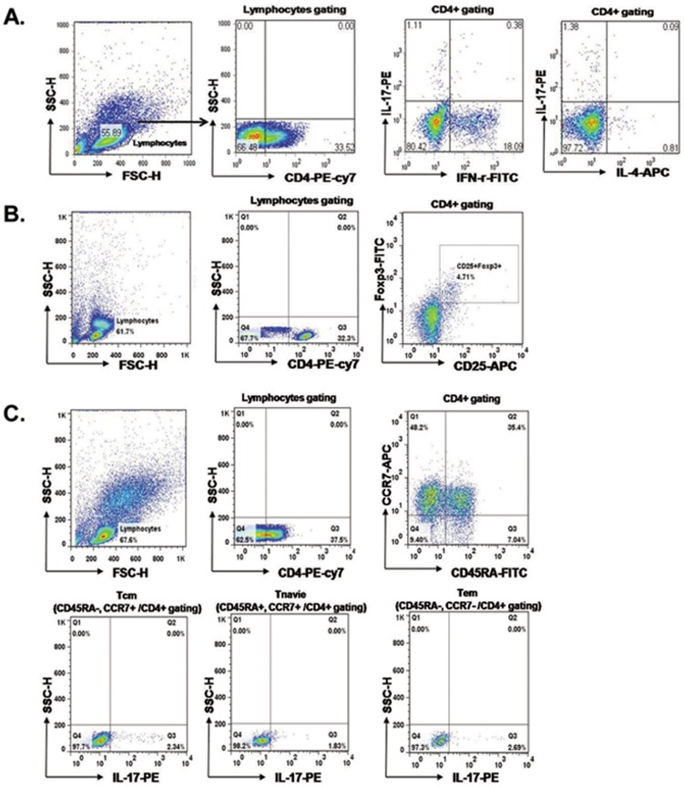 Flow cytometric analysis of T cell subsets. PBMCs were stained with anti-CD4 PE-cy7, anti-CD25 APC, anti-IFN-γ FITC, anti-IL-17 PE, anti-IL-4 APC and anti-Foxp3 FITC. CD4+ cells were gated for further analysis. PBMC from patients before KT, patients at 1month after KT and patients at 3 month after KT were stimulated for 4 h ex vivo with PMA and ionomycin in the presence of Golgi Stop. The percentage of Target cells was measured by flowcytometry. The frequency (%) of Lymphocyte/Leukocyte cells, CD4 + T/Lymphocyte cells, IL-17+/CD4 + T cells, IFN-γ + /CD4 + T cells, IL-4 + /CD4 + T cells (A) and CD25 + FOXP3 + /CD4 + T cells (B) in patients before KT, patients at 1month after KT and patients at 3 month after KT. After surface staining with anti-CD4, CD45 and CCR7 mAbs, cells were fixated and permeabilized and intracellular accumulated cytokines were detected with IL-17 mAbs. T naïve /CD4 + T (CD45RA + CCR7 + /CD4 + Tcells), IL-17 + /T naïve , T CM /CD4 + T (CD45RA − CCR7 + /CD4 + Tcells), IL-17 + /T CM + and T EM /CD4 + T (CD45RA − CCR7 − /CD4 + Tcells), IL-17 + /T EM + (C).