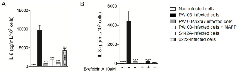 ExoU PLA 2 activity stimulates IL-8 secretion by P. aeruginosa -infected A549 cultures. In (A) and (B), cells were infected with the different P. aeruginosa strains for 21 hours and the concentrations of IL-8 in supernatants were assessed by ELISA. In (B), <t>Brefeldin</t> A was added or not to the gentamicin-containing culture medium. The graphs show the means ± SEM of three assays performed in quadruplicate. ***p