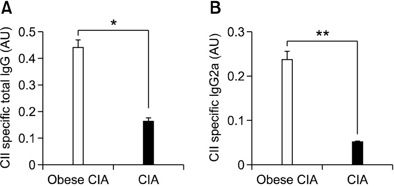 The antigen-specific autoantibodies increased in the obese CIA mice. Ten weeks after the second immunization, sera from the obese CIA and CIA mice ( n = 6 for each group) were collected. The CII-specific total <t>IgG</t> (A) and <t>IgG2a</t> (B) concentrations were determined in the serum samples of the individual mice by <t>ELISA.</t> The data is expressed as the mean ± SD. * P