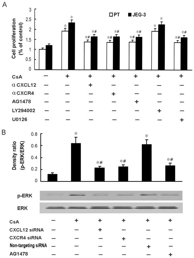 EGFR/ERK signaling pathway is involved in the CsA-induced proliferation of human trophoblast cells. A : Primary human trophoblast cells and JEG-3 cells were treated with 1 μM CsA and neutralizing antibody against CXCR4 (20 µg/ml) or CXCL12 (40 µg/ml), or <t>U0126</t> (20 μM), or LY294002 (20 μM), or AG1478 (200 nM) for 48 h, and then subjected to BrdU cell proliferation assay. Data are presented as mean ± SEM of three independent experiments. *P