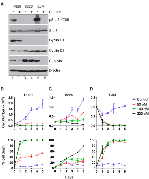 Stat3 inhibition induces growth arrest and cell death in human MM cell lines. ( A ) Immunoblot analysis of Stat3, pStat3-Y705, cyclin D1, cyclin D2 and survivin in human MM cell lines treated for 24 h with S3I-201 (RPMI-8226, 100 μM; H929 and EJM, 50 μM). β-actin levels are shown as loading control. ( B-D ) Quantification of cell growth and cell death of H929 ( B ), RPMI-8229 ( C ) and EJM ( D ) cells at various time points following treatment with S3I-201 at the indicated concentrations. Graphs are representative of two independent experiments.