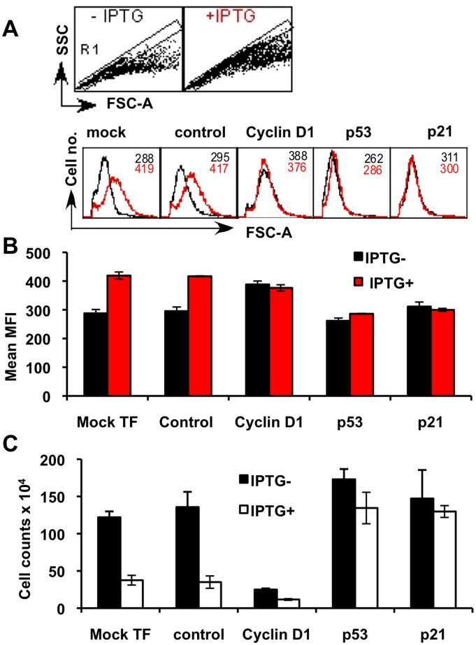 Cyclin D1 is not required for p14ARF-induced cell growth (size, [forward scatter; FSC-A]). MCF7 cells were transfected in triplicate with siRNA as described in Figure 4 , and cells were harvested at day 3 and analysed using a BD LSRII cytometer. Flow cytometry data (20,000 events) were acquired using DIVA software (version 6.1.3), analysed with CellQuest Pro (version 6) and composite figures were generated with CANVAS (version X) software. A. To eliminate cell doublets and clumps from the analysis, single cells were gated (R1) from FSC-A versus <t>FCS-H</t> dot plots. A representative plot only is shown from mock-transfected cells. FSC-A histograms of the R1 populations were then used to indicate relative cell size of MCF-7 cells ± <t>IPTG</t> treatment after siRNA knockdown of cyclin D1, p53 and p21. Black line shows cells without IPTG and the red line shows cells treated with IPTG. B. Mean Fluorescent Intensity (MFI) analysis of FSC-A from triplicate biological experiments; data shown are mean MFI ± SD. C. Cell counts were performed using a haemocytometer. Data were presented as mean cell counts (x10 4 ) ± SD performed on three separate occasions.