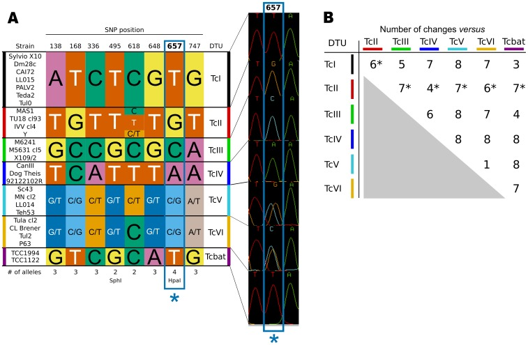 Key polymorphic sites in the T. cruzi TcSC5D gene. A: diploid genotypes built from identified highly informative sites (see main text), showing a section of one chromatogram around the tetra-allelic SNP at position 657. B: Summary of observed nucleotide changes between DTUs for these six sites. In the case of the comparisons with the TcII DTU, this is the minimum expected number of changes (marked with * in the figure), because of the diversity observed at position 618 in strains from this DTU.