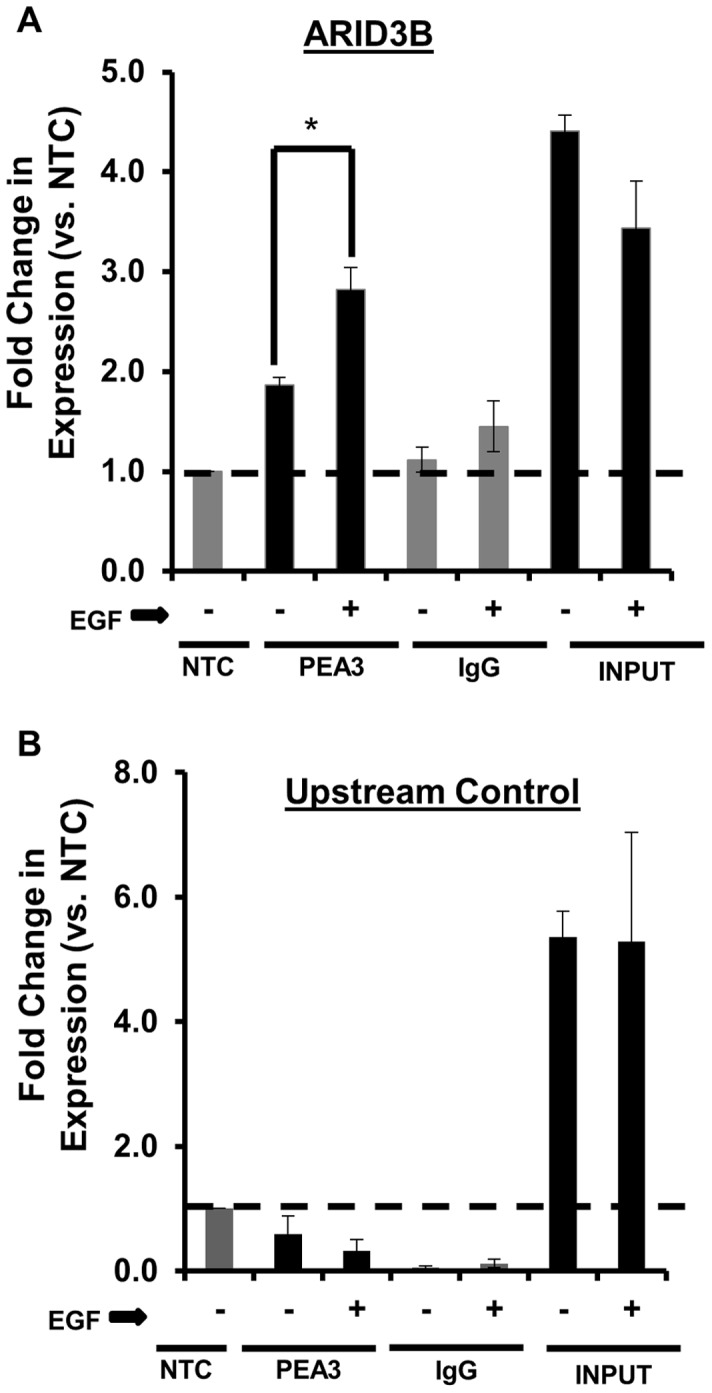 EGFR regulates PEA3 binding to the ARID3B promoter. Chromatin immunoprecipitation (ChIP) analysis confirmed the binding PEA3 to the ARID3B promoter region. ChIP was performed on OVCA 429 cells serum starved (SS) for 24 h then treated with or without 20 nM EGF for 24 h. Quantitative PCR analysis was conducted for ( A ) a region of the ARID3B promoter containing ETS/PEA3 binding site and ( B ) a promoter sequence upstream of the ETS binding site. ChIP was performed using IgG (negative control) or anti-PEA3. Expression was normalized to NTC (no template control). The no template control (NTC) expression was a boundary limit (expression fold = 1), any fold-expression below this limit (expression