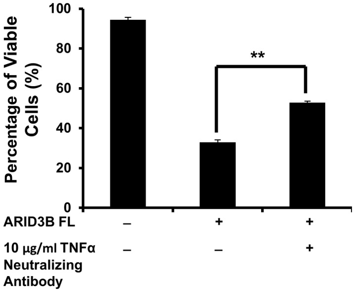 Anti-TNFα neutralizing antibody impairs ARID3B Fl apoptotic activity. Flow cytometry analysis using Annexin V and 7-AAD was used to evaluate the apoptosis in OVCA 429 overexpressing the ARID3B Fl treated with or without 10 µg/ml anti-TNFα-neutralizing antibody. Twenty four hours pre-transduction with ARID3B Fl, OVCA 429 cells were treated with or without 10 µg/ml of human an anti-TNFα neutralizing antibody. Seventy two hours post transduction flow cytometry for Annexin V and 7-AAD was performed on OVCA 429 cells and the percentage of viable cells was expressed as the mean ± SEM of triplicate measurements. Statistical analysis was performed to determine if there were any significant changes between ARID3B Fl transduced cells vs. anti-TNFα treated ARID3B Fl transduced cells. [**p