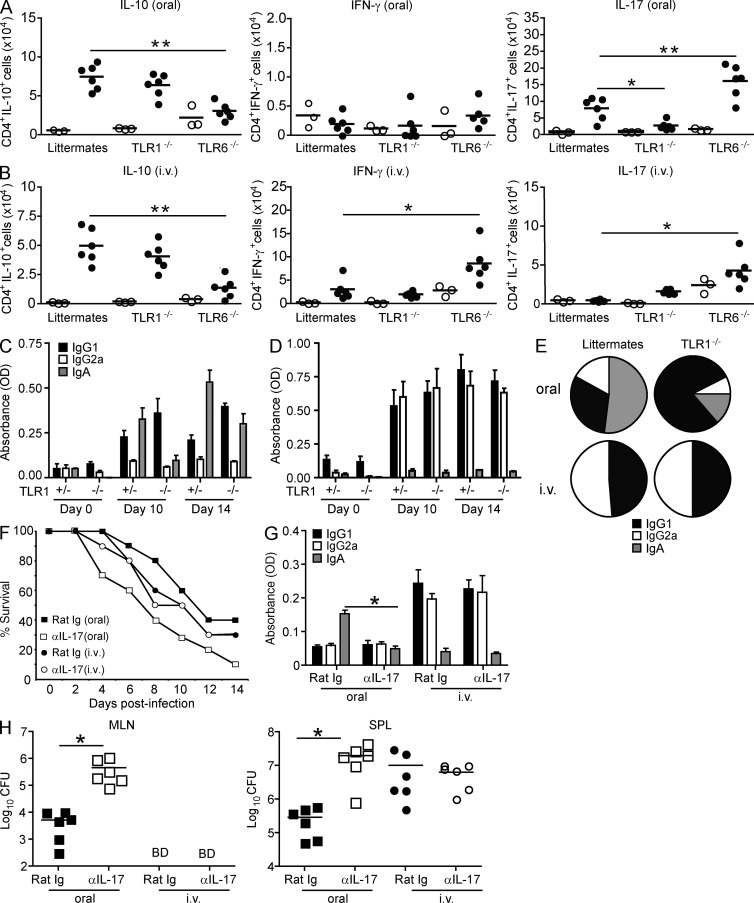 TLR1 is important for inducing IL-17–mediated immunity during oral infection. (A and B) TLR1 −/− , TLR6 −/− , and littermates were infected orally (A) or i.v. (B) with 10 5 CFU Y. enterocolitica . 6 d after infection, MLNs (oral) or SPLs (i.v.) were harvested. Intracellular cytokine production was analyzed by flow cytometry; plots are representative of one out of six infected mice. Total cell counts were determined for naive (open circles) or infected (closed circles) mice. *, P