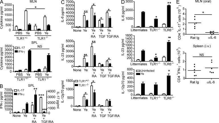 TLR1-dependent IL-6 is critical for inducing T H 17 cells during oral infection. (A) Levels of IFN-γ and IL-17 from co-cultures of naive SPL CD4 + T cells and MLN or SPL DCs from TLR1 +/− or TLR1 −/− mice stimulated with 10 µg/ml Y. enterocolitica lysate (Ye). Data shown are the mean ± SEM ( n = 5) from two individual experiments. *, P