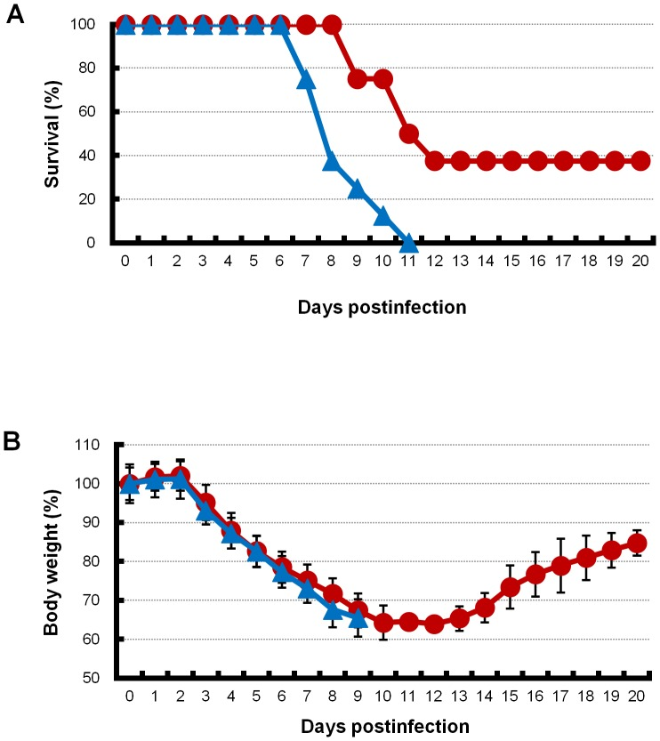 Survival curves and body weights of infected mice with combination therapy or monotherapy. (A) Survival curves of infected mice with combination therapy of artificial surfactant with laninamivir octanoate are shown. Mice infected with an extremely high dose (3741 MLD 50 ) of PR8 virus were treated with laninamivir octanoate. The mice were additionally administered artificial surfactant (combination therapy, red line) or normal saline solution (monotherapy, blue line) intranasally once daily during 3–14 days postinfection. Significant differences in mouse survival rates between the combination therapy and monotherapy groups were analyzed by the log-rank original method. Experiments were independently repeated three times. Percentage survival in a representative experiment is shown. (B) Mouse body weight of the combination therapy (red line) and monotherapy (blue line) groups is shown. Experiments were independently repeated three times. The percentage of mouse body weight in a representative experiment is shown. Differences in means ± SD are shown.