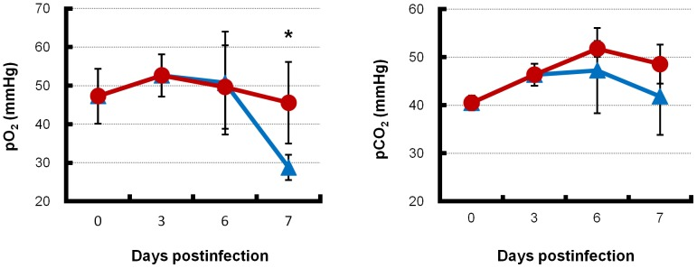 Blood O 2 and CO 2 pressures of infected mice with combination therapy or monotherapy. Mice intranasally inoculated with an extremely high dose (3741 MLD 50 ) of PR8 virus were treated with laninamivir octanoate. The mice were additionally administered artificial surfactant (combination therapy, red lines) or normal saline solution (monotherapy, blue lines) intranasally once daily during 3–14 days postinfection. Mice ( n = 3–6) in each group were sacrificed at the indicated days postinfection. Mice in each group were sacrificed at 7 days postinfection, when the mouse survival rate in the monotherapy group was approximately 50%. Blood was collected and immediately measured for O 2 (left panel) and CO 2 (right panel) pressures using the i-STAT portable blood gas analyzer. Differences in means ± SD and p values are shown. * p