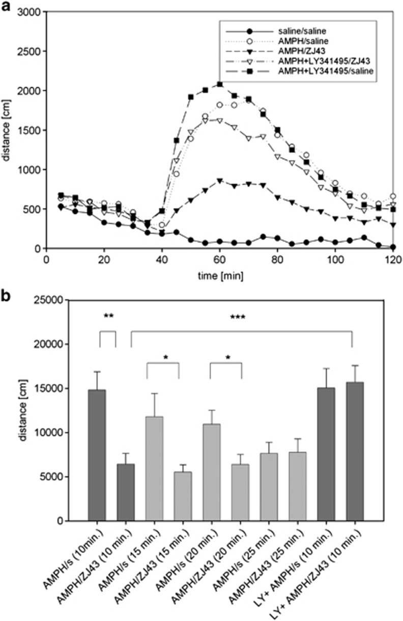 Effects of ZJ43 treatment after onset of d -amphetamine (AMPH)-induced motor activation in C57BL mice. ( a ) Time course of AMPH-induced motor activation presented in 5-min intervals. To test the efficacy of N -acetylaspartylglutamate (NAAG) peptidase inhibitor, ZJ43, in the reversal of ongoing AMPH- induced motor activation, animals were habituated in the open field chamber (0–30 min), injected (intraperitoneally (i.p.)) with saline or 3 mg kg −1 AMPH at the 30 min time point in this figure. Saline or ZJ43 (150 mg kg −1 , i.p.), ZJ43 with LY341495 or LY342495 with saline were injected 10 min later at the 40 min time point. n =14–16 animals/group. Coinjection of LY341495 with AMPH did not significantly affect the induced motor activation but did block the effect of ZJ43 on AMPH treatment. ( b ) Mice received AMPH with or without LY341495 injected at the 30 min time point as in Figure 2a . Saline or ZJ43 was injected 10, 15, 20 and 25 min after AMPH. The distances travelled were measured from the time point 5 min after the second injection to the 100 min time point shown in Figure 2a , resulting in distance traveled data over 55, 50, 45 and 40 min intervals for the 10, 15, 20 and 25 min post-MPH treatment groups, respectively. Distance travelled is compared between saline and ZJ43 treatments at each post-AMPH treatment time.