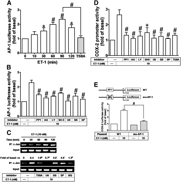 ET-1-stimulated COX-2 promoter activity is mediated through AP-1-dependent pathway. ( A ) Time dependence of ET-1-enhanced AP-1 transcription activity; cells were transfected with an AP-1-luciferase reporter gene and then exposed to ET-1 for the indicated time intervals. ( B ) After transfection with AP-1-luciferase reporter gene, the cells were pretreated with PP1 PP1 (100 nM), AG1478 (AG, 1 μM), LY294002 (LY, 300 nM), SH-5 (10 nM), U0126 (U0, 1 μM), SB202190 (SB, 300 nM), SP600125 (SP, 300 nM), or ( A ) TSIIA (100 nM) for 1 h and then incubated with ET-1 (10 nM) for 90 min. ( C ) Cells were pretreated without or with TSIIA, U0126 (U0), SB202190 (SB), SP600125 (SP), or BQ788 (BQ) for 1 h and then incubated with ET-1 (10 nM) for the indicated time intervals (upper panel) or 90 min (lower panel). The c-Jun/AP-1 binding activity was analyzed by chromatin-IP (ChIP)-PCR assay. ( D ) For COX-2 promoter activity, cells were pretreated with PP1, AG1478 (AG), LY294002 (LY), SH-5, U0126 (U0), SB202190 (SB), or SP600125 (SP), or TSIIA for 1 h and then incubated with ET-1 (10 nM) for 6 h. ( E ) Schematic representation of a 5′-promoter regions of the mouse different COX-2 promoter constructs, either wild-type (WT) or mutated by single-point mutation of the AP-1 binding site (mu-AP-1) cloned to the pGL-luciferase reporter gene; the translational start site (+1) of the luciferase reporter gene is indicated by an arrow. Cells were transfected with WT COX-2 promoter reporter gene (WT) or AP-1 mutated COX-2 promoter reporter gene (mu-AP-1) and then incubated with or without ET-1 (10 nM) for 6 h. The promoter reporter activity was determined. Data are expressed as mean ± SEM of at least three individual experiments ( n = 3). * P