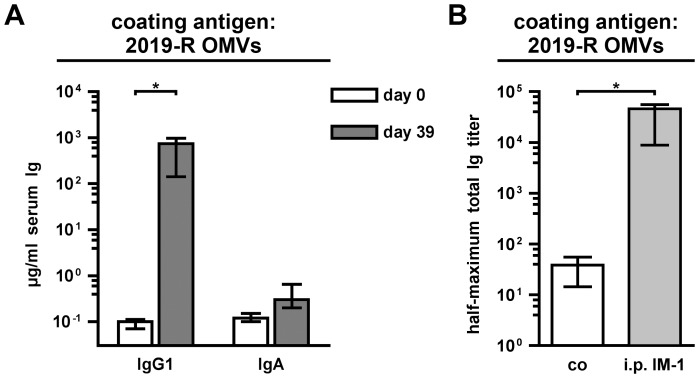 Characterization of the immune response from mice intraperitoneally immunized with NTHi OMVs. (A) Shown are the median IgG1and IgA titers to OMVs derived from NTHi strain 2019-R in sera from mice intraperitoneally immunized with IM-1 collected at day 0 and 39 (n = 7). (B) Shown are the median half-maximum total Ig titers to OMVs derived from NTHi strains 2019-R in sera collected at day 39 from mice intraperitoneally immunized with IM-1 (i.p. IM-1) as well as from nonvaccinated control mice (co) (n = 6 for the co group and n = 7 for the i.p. IM-1 group). The error bars indicate the interquartile range of each data set for each time point. Significant differences between the data sets are marked by asterisks ( P