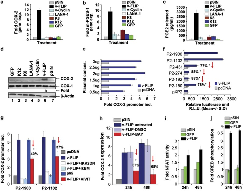 Effect of v-FLIP/K13 on COX-2, mPGES-1 gene expression, COX-2 and COX-1 protein levels and PGE2 secretion and role of cis -acting factors on transcriptional regulation of COX-2 promoter by v-FLIP/K13. ( a , b ) HMVEC-d cells were infected with KSHV latency gene (LANA-1, v-FLIP, v-Cyclin, K8 and K12), GFP or empty vector (pSIN) expressing lentiviruses. Forty-eight hours after infection, cells were washed, lysed, total RNA was prepared, and COX-2 and mPGES-1 expression were quantitated using COX-2 and mPGES-1 gene-specific primers normalized to GAPDH levels as described earlier. 5 Fold induction was calculated by considering levels in pSIN lentivirus-infected cells as onefold. ( c ) Supernatants collected from cells in ( a ) were used for PGE2 detection by methods described previously. 5 Each reaction was done in triplicate and each point represents the average±s.d. of three independent experiments. ( d ) Lysates prepared from the above mentioned cells were used for quantitating COX-2 protein levels. ( e ) A total of 293 cells seeded in 24-well tissue culture plate were fed with antibiotic-free low serum (0.5% FBS) Dulbecco's modified Eagle's medium for 18 h before transfection using Lipofectamine 2000 (Invitrogen). Low serum conditions were maintained throughout the experiment. In all, 293 cells were transfected with COX-2 full-length promoter construct (P2-1900-luc), along with increasing concentrations (0.5–3 μg) of either control pcDNA or v-FLIP/K13 expression plasmid. Forty-eight hours after transfection, cells were harvested, lysed and assayed for R.L.U. as described before. Promoter induction in control pcDNA cotransfected cells was considered as onefold. ( f ) A total of 293 cells were cotransfected with various COX-2 deletion constructs (as mentioned in the supplement) along with 2 μg each of control pcDNA or v-FLIP/K13 expression plasmid. Forty-eight hours after transfection, cells were harvested and assayed for R.L.U. as described earlier. ( g ) 293 cells w