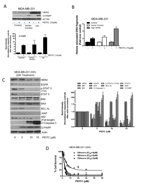 Effect of phenethyl isothiocyanate (PEITC) on MDA-MB-231 cells expressing high HER2 (HH) . (A) Comparative effect of PEITC treatment on MDA-MB-231 cells with stable overexpression of HER2 relative to parent cells and vector control cells. Cells were treated for 24 h with 10 μM PEITC, and whole lysate was analyzed by western blotting for phosphorylated signal transducer and activator of transcription 3 (p-STAT3) (Y705) and cleavage of poly-ADP ribose polymerase (PARP). (B) MDA-MB-231, vector control cells and high HER2 cells were treated with 10 μM of PEITC for 24 h and <t>apoptosis</t> was estimated using <t>ELISA</t> cell death assay by measuring histone associated <t>DNA</t> fragments. (C) MDA-MB-231 (HH) cells were treated with different concentrations of PEITC for 24 h, and the whole cell lysates were analyzed by western blotting. (D) MDA-MB-231 (HH) cells were treated with PEITC for 24, 48 and 72 h with increasing concentrations of PEITC and cell survival was measured by sulforhodamine B assay. The figures are representative of at least three independent experiments with eight replicates. * Statistically different compared with control ( P