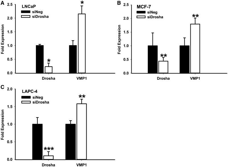 Drosha knock-down enhances VMP1 transcript levels. Total RNA was prepared from ( A ) LNCaP, ( B ) MCF-7 or ( C ) LAPC-4 cells, which had been transfected for 72 h with a negative control siRNA (siNeg) or Drosha siRNA (siDrosha). Expression of Drosha and VMP1, relative to actin, was measured by quantitative RT-PCR. Quantification is the result of three independent measurements. * P