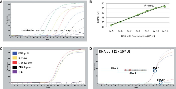 Sensitive detection of purified DNA polymerase using DPE-PCR. ( A ) A commercial source of DNA polymerase I was assayed in duplicate at 10-fold increments starting at 2 × 10 −5 U down to 2 × 10 −11 U per reaction. A representative DPE-PCR curve is shown for each polymerase input level and NIC. ( B ) A plot was constructed from n = 4 data points per polymerase input level, taken from two independent experiments and linear regression analysis was performed. ( C ) Triplicate reactions containing 2 × 10 −7 U of DNA polymerase I, Klenow, Klenow (exo−) and E. coli DNA Ligase were assayed in comparison to an NIC. A representative DPE-PCR curve is presented for each of the assayed enzymes and NIC. ( D ) Triplicate DPE-PCR curves are shown from corresponding DPE reactions containing a 50 -µM (dATP, <t>dGTP,</t> dTTP) mixture supplemented with 50 µM of either <t>dCTP</t> or ddCTP. A schematic representing some of the first available sites for dCTP or ddCTP incorporation within the DNA substrate is presented adjacent to the DPE-PCR curves.