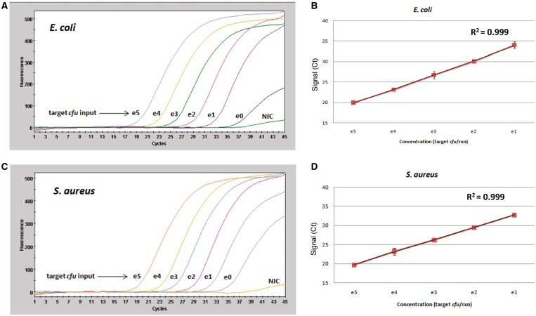 DPE-PCR enables sensitive and quantitative detection of Gram-negative and Gram-positive bacteria via measurement of DPE activity in crude lysates. ( A ) Decreasing amounts of E. coli colony forming unit were spiked into bead lysis-coupled DPE-PCR. NIC were also included to monitor reagent background levels. All colony forming unit spikes and NICs were performed in triplicate. A representative DPE-PCR curve is shown below for each level of bacterial input. Colony count plating and gsPCR were performed in an effort to obtain a better estimate of the actual colony forming unit placed into each reaction and is presented in Supplementary Figure S5 ( B ) A plot of E. coli DNA polymerase activity and linear regression analysis is presented. Graphs were generated using the average C t values obtained from triplicate reactions of bacterial spikes ranging from 1 × 10 5 to 1 × 10 1 input colony forming unit. ( C and D ) Colony forming unit titration experiments were performed for S. aureus exactly as described above for E. coli . Colony count plating and gsPCR were performed in an effort to obtain a better estimate of the actual colony forming unit placed into each reaction and is presented in Supplementary Figure S6 .