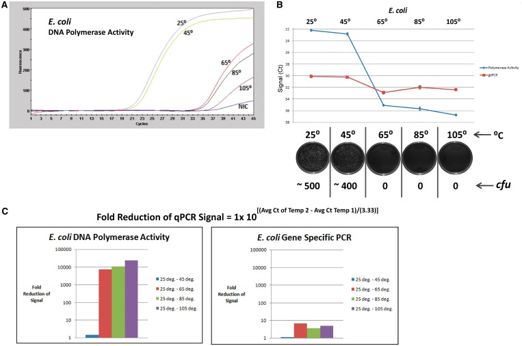 DPE-PCR as an indicator of E. coli viability in response to heat treatment. ( A ) Aliquots of an E. coli suspension (∼2000 cfu/µl) were incubated at 25°C, 45°C, 65°C, 85°C and 105°C for 20 min. After heating, each bacterial stock was cooled to room temperature and 5 µl were transferred to the bead lysis-coupled DPE-PCR assay. DPE-PCR curves representing E. coli -derived DNA polymerase activity following each of the indicated temperature treatments are presented. ( B ) Plots were generated from triplicate DPE-PCRs and gsPCR of genomic DNA (from the same lysates) after the indicated temperature treatments of E. coli suspensions. Parallel plating was also performed in triplicate for each of the treated E. coli suspensions. Representative colony forming unit monitoring plates are presented below the graph, revealing bacterial viability status after treatment at each temperature. ( C ) DPE-PCR is compared with gsPCR of genomic DNA in response to the various temperature treatments. 'Fold Reduction of qPCR Signal' was calculated using the indicated equation and the values obtained were used to generate comparative bar graphs.